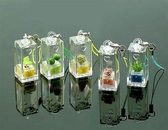 plantes exotiques sous verre. Black Bedroom Furniture Sets. Home Design Ideas